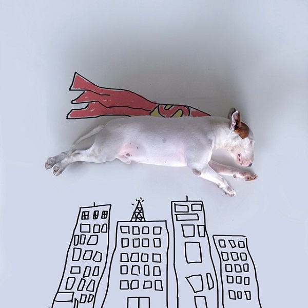kopek-super-man