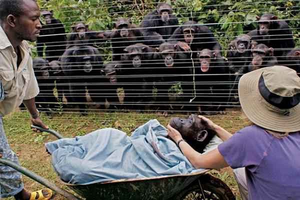 sempanze-cindy