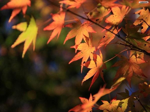 Yapraklı ağaç ne zaman sona erer Sonbahar sayfasının anlamı