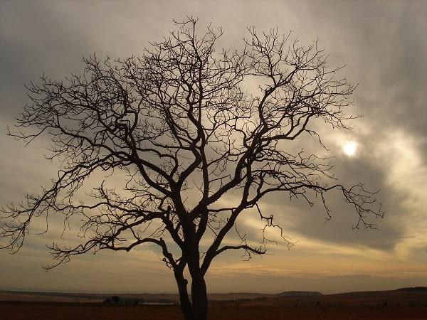 Sevdiğimiz şairlerin Kaleminden En Güzel Sonbahar şiirleri