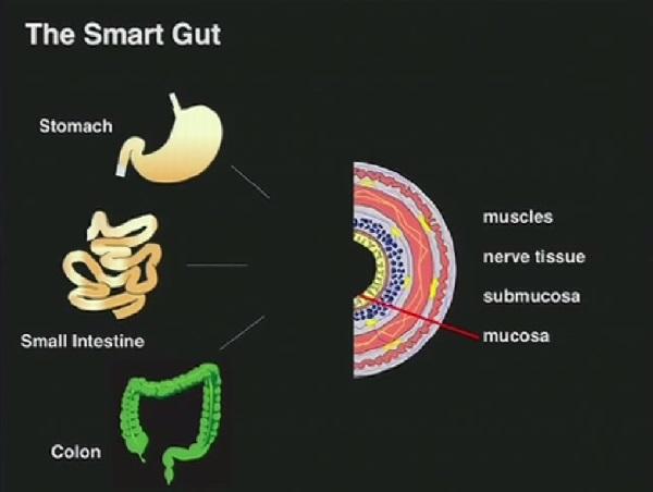the-smart-gut