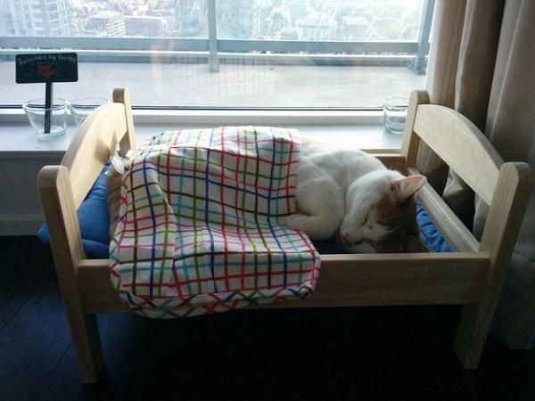 yatak-kedi