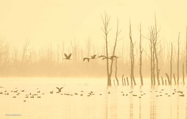 2014-10-24 17_18_42-Cranes at dawn _ Leon Bohlmann _ 10 Years and Under _ Wildlife Photographer of t
