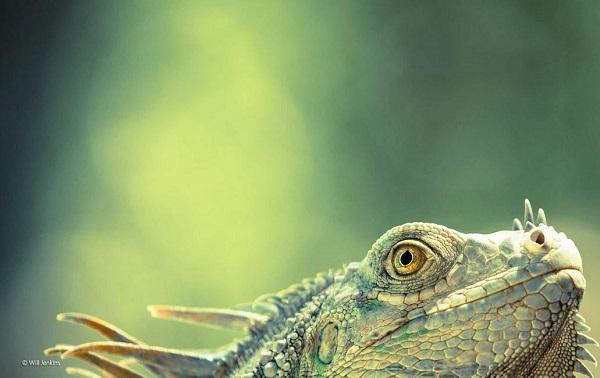 2014-10-24 17_21_25-Green dragon _ Will Jenkins _ 11-14 Years _ Wildlife Photographer of the Year