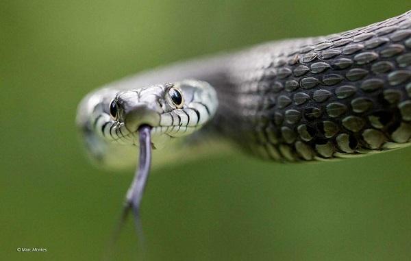 2014-10-24 17_24_45-Snake-eyes _ Marc Montes _ 11-14 Years _ Wildlife Photographer of the Year
