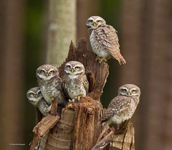 2014-10-24 17_25_28-Owlets united _ Sitara Karthikeyan _ 11-14 Years _ Wildlife Photographer of the