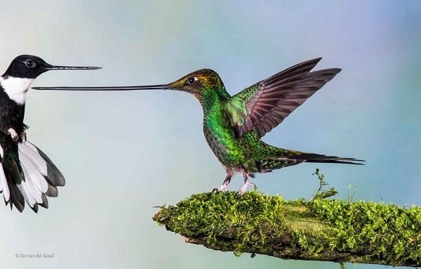2014-10-24 17_37_56-Touch _ Jan van der Greef _ Birds _ Wildlife Photographer of the Year