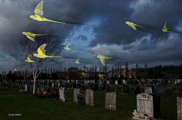 2014-10-24 17_40_27-Feral spirits _ Sam Hobson _ Birds _ Wildlife Photographer of the Year