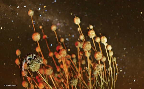 2014-10-24 17_46_00-Spikes and stars _ Hannes Lochner _ Amphibians and Reptiles _ Wildlife Photograp