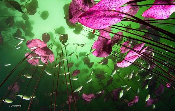 2014-10-24 17_49_02-Glimpse of the underworld _ Christian Vizl _ Plants and Fungi _ Wildlife Photogr