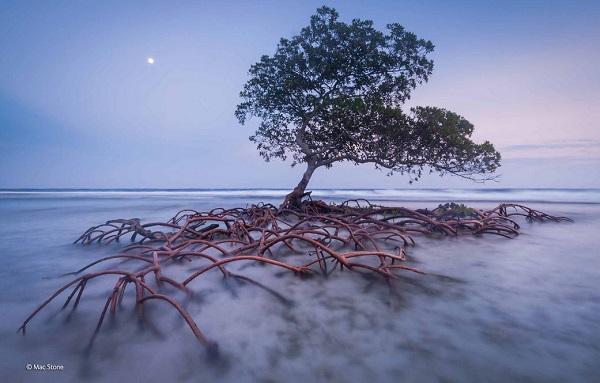 2014-10-24 17_49_45-Beach guardian _ Mac Stone _ Plants and Fungi _ Wildlife Photographer of the Yea