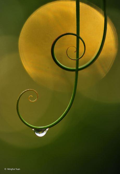 2014-10-24 17_52_08-Natural harmony _ Minghui Yuan _ Plants and Fungi _ Wildlife Photographer of the