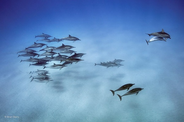 2014-10-24 17_56_25-Dolphin downtime _ Brian Skerry _ Underwater Species _ Wildlife Photographer of