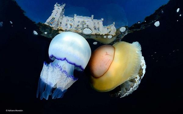 _ Adriano Morettin _ Underwater Species _ Wildlife Photographer o