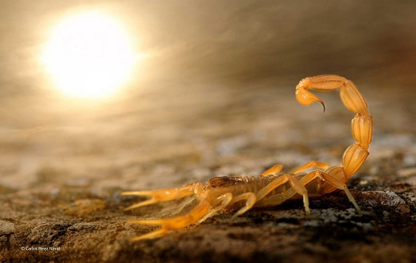Stinger in the sun _ Carlos Perez Naval _ 10 Years and Under _ Wildlife Photogra