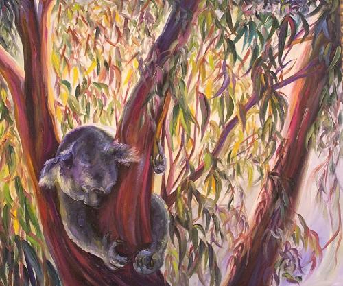 concetta-koala
