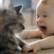 Kedi Bebek | Listelist