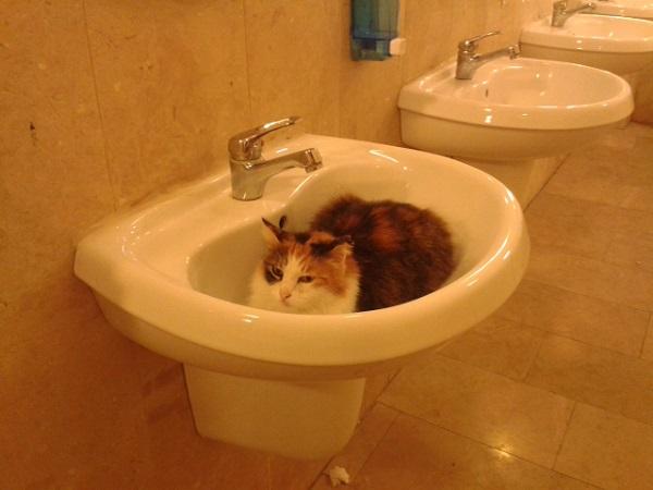lavoboda-kedi
