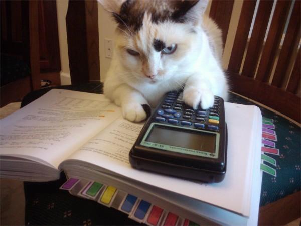 hesap-yapan-kedi