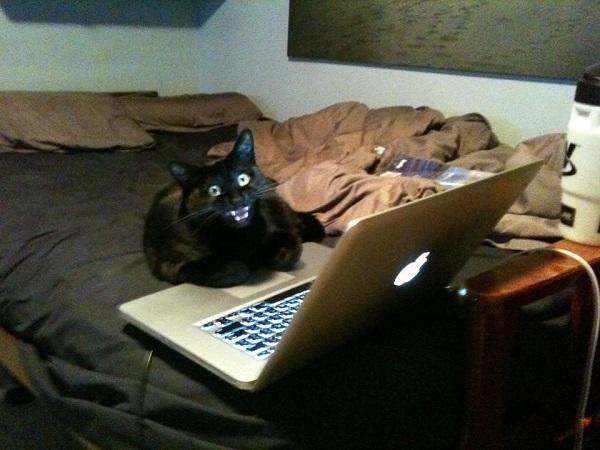 kedi-bilgisayar