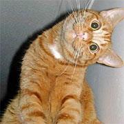 Kedi | Listelist