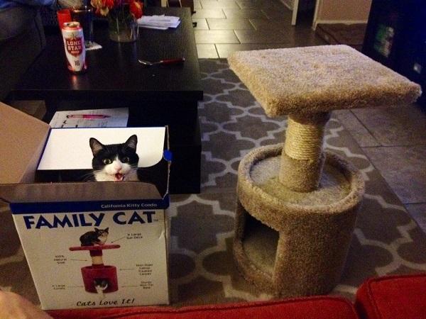 kedi-oyuncak-kutu