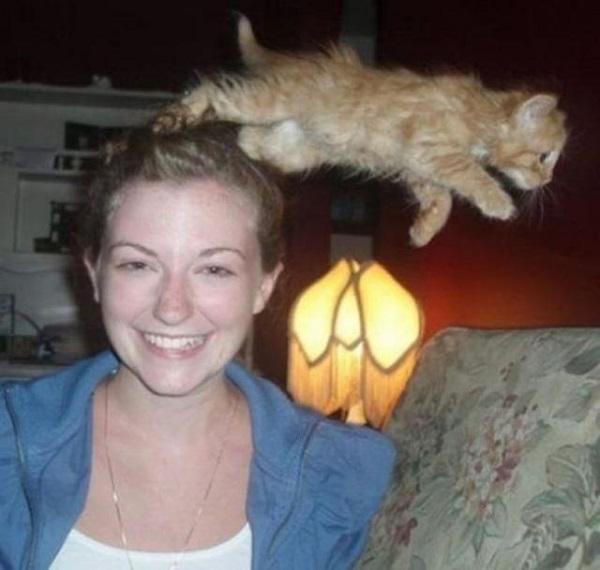 kedi-photobomb