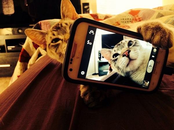 kedi-selfie