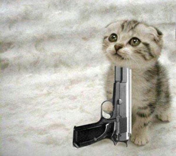 kedi-silah
