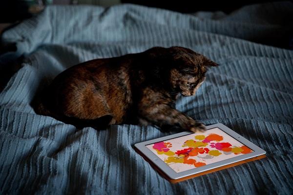 kedi-tablet