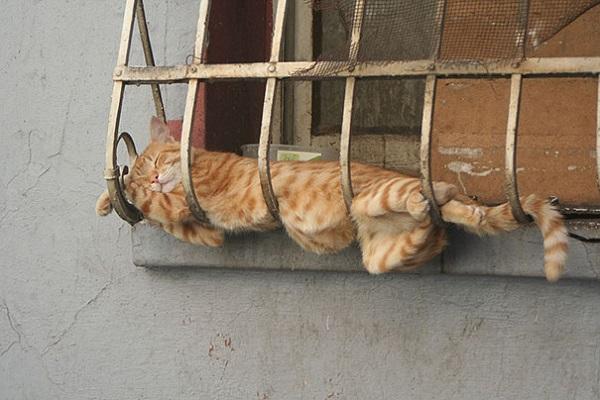 kedi-uyku
