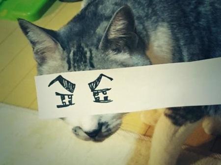 kediler-ve-gozleri-listelist-04