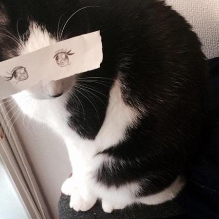 kediler-ve-gozleri-listelist-05
