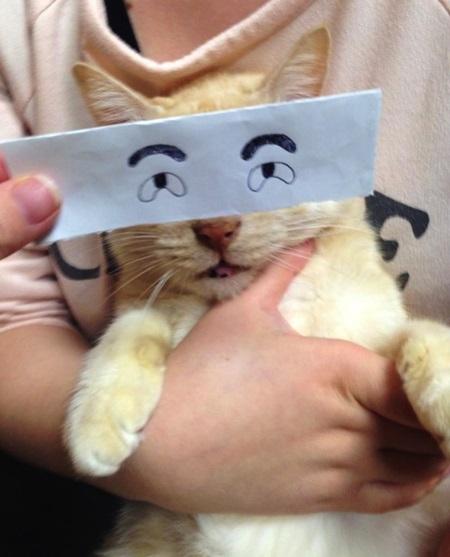 kediler-ve-gozleri-listelist-06