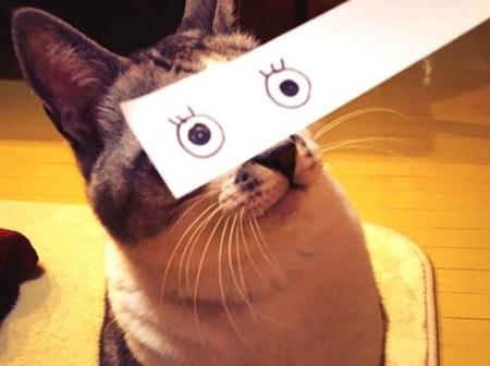 kediler-ve-gozleri-listelist-07