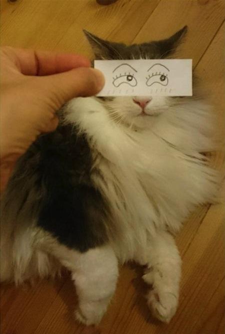kediler-ve-gozleri-listelist-10