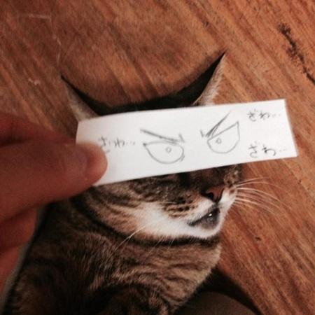 kediler-ve-gozleri-listelist-11
