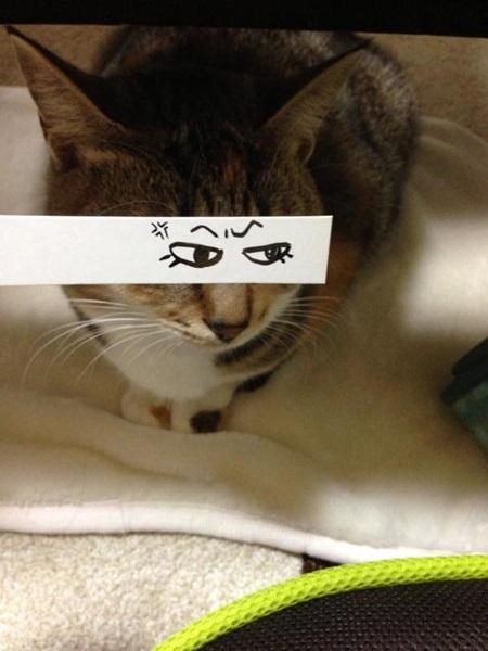 kediler-ve-gozleri-listelist-12