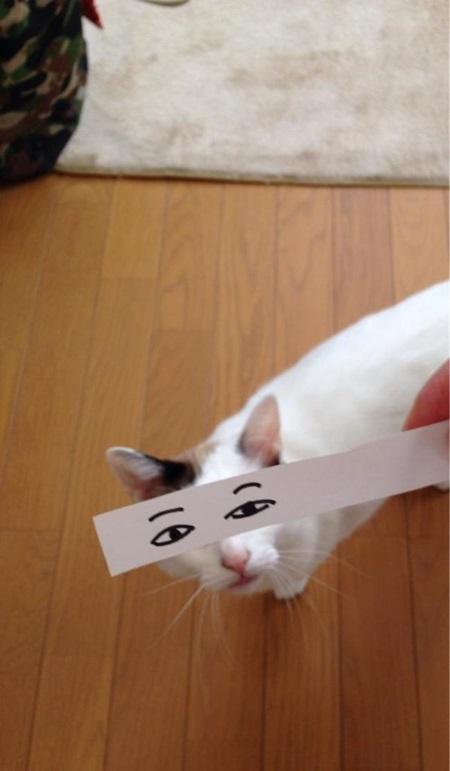 kediler-ve-gozleri-listelist-13