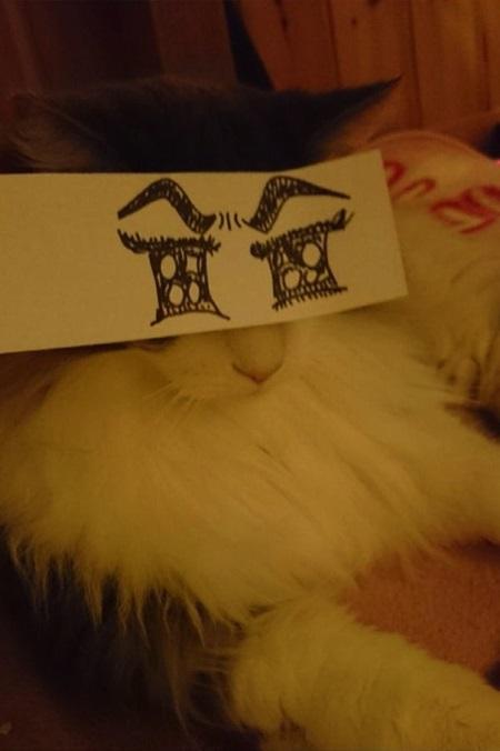 kediler-ve-gozleri-listelist-15