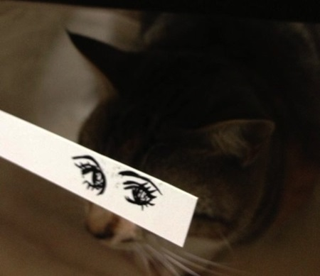 kediler-ve-gozleri-listelist-16