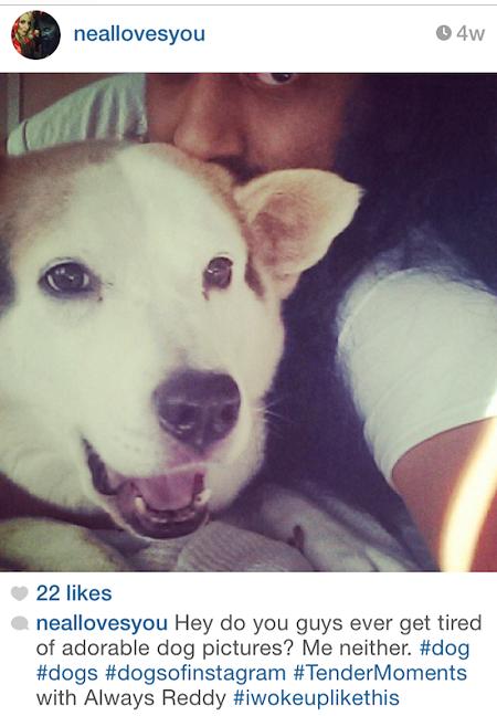 kopek-instagram