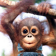 Maymun | Listelist