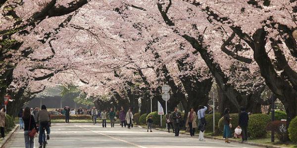 tokyo-universite