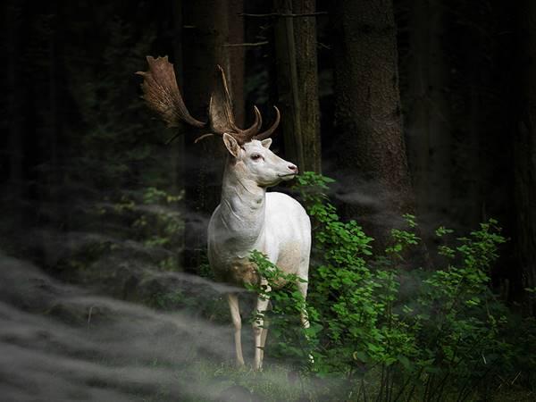 sony-fotograf-yarismasi-2015-006