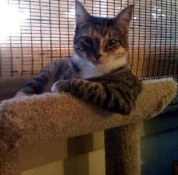 ciddi kedi