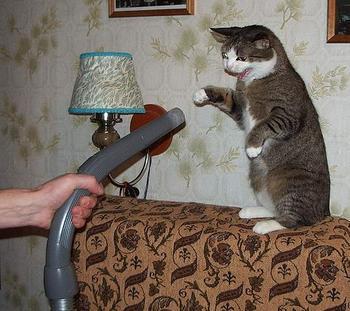 elektrik-supurgesi-kedi