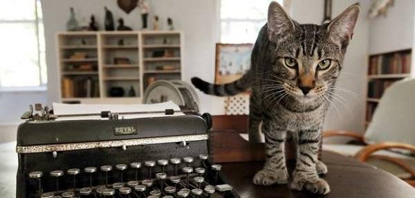 hemingway-kedi