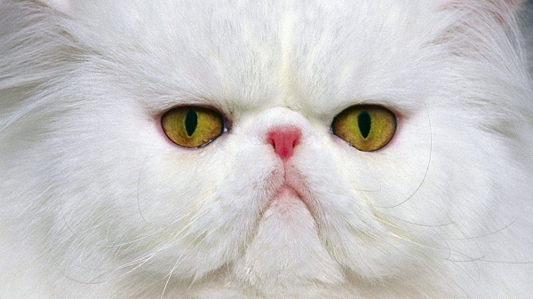 kedi-cok-uzgun