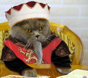 kedi-kral